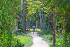 green bengal. (manwar2010) Tags: people green nature bengal uluberia