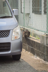 Today's Cat@2013-04-26 (masatsu) Tags: cat canon catspotting thebiggestgroupwithonlycats powershots95