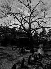 Graveyard Tree (Mr. Ducke) Tags: tree cemetery graves