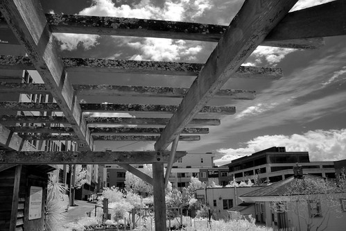 Trellis In Infrared