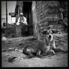 One afternoon in Bikaner... (vytautas ambrazas) Tags: dog man afternoon brickwall heat bikaner hipstamatic blackeyssupergrainfilm chunkylens