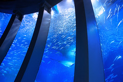 The Abyss (Lemuel Montejo) Tags: blue fish japan aquarium nikon marine underwater abyss seaparadise d600 nikond600 nikon2870f28d