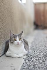 (Tal-Heruty) Tags: cats animal animals cat canon outdoors 50mm backyard bokeh kitty naturallight kitties 18 60d