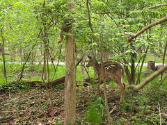P5063794 (Raccoon Photo) Tags: flowers trees friends ohio wild summer lake cute green nature animals creek river walking fun spring furry squirrel squirrels friend funny stream hiking walk nuts may handsome peanuts hike deer friendly peanut wildanimal parma nut reservation walkinginnature metropark metroparks wildsquirrel parmaohio bigcreekparkway hikinginnature stateroadpark