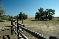 30 - Fence & bison (Scott Shetrone) Tags: animals utah events places antelopeisland bison mammals 7th anniversaries