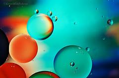 drops of jupiter (sure2talk) Tags: dropsofjupiter oilonwater circles colours shallowdof bokeh oil water nikond7000 nikkor85mmf35gafsedvrmicro macro 7daysofshooting week2 iconsandsymbols geometrysunday
