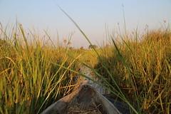 On The River (www.mattprior.co.uk) Tags: adventure adventurer journey explore experience expedition safari africa southafrica botswana zimbabwe zambia overland nature animals lion crocodile zebra buffalo camp sleep elephant giraffe leopard sunrise sunset