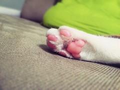 (PUPUlkujoyce) Tags: cat     pet