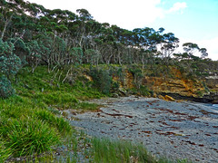 Dark Beach VII (elphweb) Tags: falsehdr fhdr seaside trees forest bush foliage australia rocky rocks outdoor