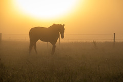 Horse in the Mist (Infomastern) Tags: sdersltt countryside dimma fog horse hst landsbygd landscape landskap mist soluppgng sunrise exif:focallength=120mm exif:aperture=71 geocountry camera:make=canon exif:isospeed=100 camera:model=canoneos760d geostate geolocation exif:lens=efs18200mmf3556is geocity exif:model=canoneos760d exif:make=canon