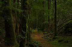 Return (Kristian Francke) Tags: green tree trees plant plants ferns moss pentax tamron golden ears provincial park august 27 2016 brown sun summer nature natural path trail road abandoned track