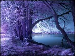 beautiful purple (beddinginnreviews) Tags: beddinginnreviews fashion reviewsbeddinginn woman style beautiful comfortable