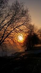 A misty winter sunrise. (pellewestberg) Tags: sunset wintersunset sunrise misty colours trees ngc