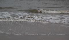 IMG_1069 (EadaoinFlynn) Tags: curracloe beach sea ireland irishsea wexford