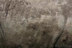 Rhino Skin (rhystabor) Tags: rough rino skin rhino canon 650d 200mm 400iso iso400 f56 1500 grey dirt nature zoo age brown
