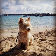 Lucky Toma   #hund #caes #cao #perro #cachorro  #perrito #perritos #cane #chien #Formentera #balearicsea #Spain (! . Angela Lobefaro . !) Tags: instagramapp square squareformat iphoneography uploaded:by=instagram hefe girl seaside boy hat hut beach bikini