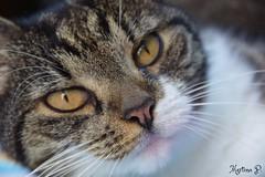 Happy Caturday... (martinap.1) Tags: cat katze happy caturday haustier nikon d3300 18200mm nature natur pet