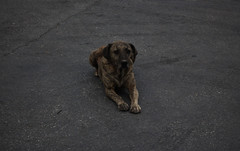 dog (Jamie Toal) Tags: 50mm canon canon550d niftyfifty malta mosta europe travel animals nature