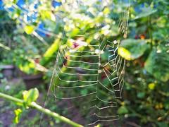 #LG #G3 #mobile #Photography #spider #net (k.vineesh) Tags: g3 net lg photography mobile spider