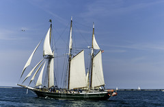 Tall ships 2016 Denis Sullivan pic3 (Artemortifica) Tags: boats chicago navypeir tallships band clouds fountains garden lakemichigan sailors sails skyline summer illinois