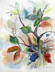 373 Mahonie (Wuwus Bilder) Tags: kunst aquarell pflanze herbst watercolour ownpainting