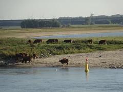 IJssel Deventer (willemalink) Tags: ijssel deventer