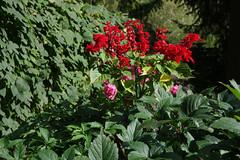 Punased lilled (Jaan Keinaste) Tags: pentax k3 pentaxk3 eesti estonia lill flower punane red