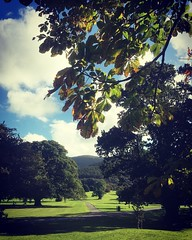 "That's some view. Sometimes you've gotta sit under a tree and take it all in. #autumnleaves #autumncolours #mountainsofmourne #kilbroney #kilbroneypark #rostrevor #lovelyday #park #parklife • <a style=""font-size:0.8em;"" href=""http://www.flickr.com/photos/94619943@N00/30038302822/"" target=""_blank"">View on Flickr</a>"