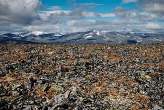 Jotunheimen, Norway (Karol Majewski) Tags: jotunheimen norway norge landscape nature oppland vg natura krajobraz mountains gry gjendesheim glittertind clouds chmury scandinavia rocks skay range ridge snow nieg grzbiet gra