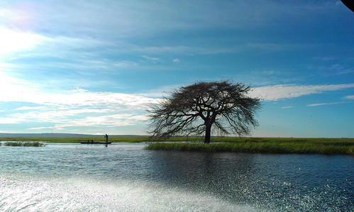 Along Barotse Floodplain, Zambia. Photo by Froukje Kruijssen, 2013.