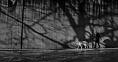 Prisonwalk (Thomas Grotmol) Tags: winter shadow blackandwhite bw mars woman dog snow ice girl animal oslo norway wall contrast canon dark walking march norge is vinter shadows walk dramatic cctv prison hund gamlebyen sn dyr grnland dogwalker sorthvitt fengsel skygger st