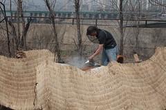 IMG_0040 (urban bees seoul) Tags: urban bees honey seoul beehive  beekeeper
