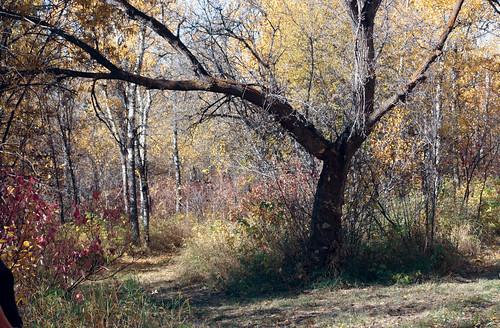 fall-image-2