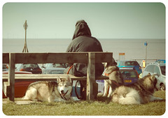 People watching, Crosby beach (Bev Goodwin) Tags: england beach dogs liverpool candid seafront crosby merseyside windturbines milemarker crosbybeach sonya37