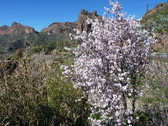 Gran Canaria - Ayacata in the Winter (elsua) Tags: winter grancanaria landscapes almendros ayacata almondtrees