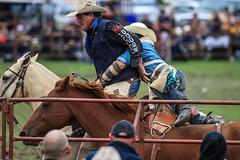 Lang Lang Rodeo-89 (Quick Shot Photos) Tags: horses cowboy sheep australia rope victoria bull rodeo cowgirl wildhorses lasso langlang