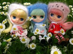 IMG_3979...Three little middies in a field of daisies.