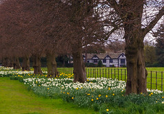 Speke Hall, Liverpool (Bev Goodwin) Tags: england liverpool tudor nationaltrust manorhouse merseyside speke spekehall sonya37