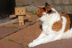 Freaky thing (MarloesK) Tags: outside danbo