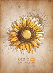 Retro Sunflower vector background (vectorbackground) Tags: old flowers plant art nature floral beautiful beauty leaves illustration pen ink painting design sketch petals bright blossom head drawing background object details retro line seeds single stems ornate isolated element handdrawn blooming