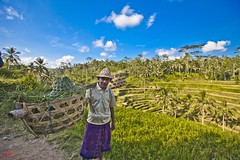 Rice farmer #6 (Ausamah) Tags: old travel sky bali woman man reflection green art love water girl beautiful field indonesia temple photography bahrain paradise child gulf rice julia farmers terrace farm pray grow scene arabic eat national arab roberts arabian agriculture hindu indonesian geographic peasant balinese ausamah alabsi