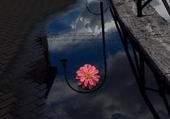 Una pozzanghera fiorita (lory6093) Tags: nuvole cielo fiore pioggia pozzanghera picsart