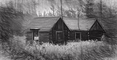 Nature Reclaims . . . (JLS Photography - Alaska) Tags: alaska alaskalandscape cabin bw blackwhite blackandwhite jlsphotographyalaska art artwork artistic sketch old abandoned logcabin logbuilding logcabins monochrome outdoor building architecture