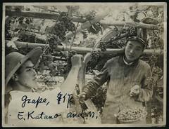 ArchJAP034 Seite 11 (Hans-Michael Tappen) Tags: archivhansmichaeltappen japan nihon nippon 1930er 1930s  weintrauben weinernte wein ernte bambusstange