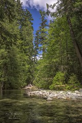 Cameron River near Cathedral Grove - Vancouver Island, BC (Freshairphotography) Tags: cameronriver cathedralgrove trees river stream forest rainforest greens vancouverisland bc explorebc explorevancouverisland ilovebc rocksandwater britishcolumbia beautifulbc nature natural explored explore
