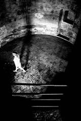 As a ghost (Napafloma-Photographe) Tags: italiesecrte ruine photographe pellicules dtailsarchitecturaux passant artetculture italie 2016 ombre croisire catgorieprojet objetselmentsettextures voyage personnes livourne noiretblanc monochrome gographie photographie architecturebatimentsmonuments constructionsanciennes napaflomaphotographe kodaktrix400 techniquephoto barrire mtiersetpersonnages kodak bandw bw livorno blackandwhite noiretblancfrance toscane it