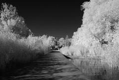Steg (ktmdriver74) Tags: murtensee see gampelen steg infrarot sony a100 hoya r72