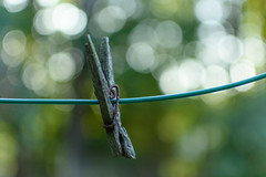 One Peg (Maggggie) Tags: odc pole line clothesline clothespin peg wire green old rusty rotting bokeh backyard