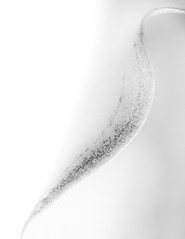 lily, details, bw (high key) (gks18) Tags: highkey canon macro extensiontube nature naturallight handheld canon5dmiii canon100mmmacro lines shapes
