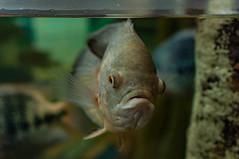 Acuario Agosto 2016 (48) (Fernando Soguero) Tags: acuario zaragoza acuariodezaragoza aragn turismo aquarium nikon d5000 fsoguero fernandosoguero